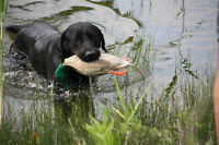 Hunting retriever trainers looking for land/water acreage