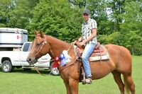 Amazing Quarter Horse For Part Board