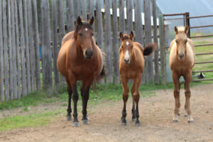 2018 AQHA colts and fillies bred to work a cow or run barrels