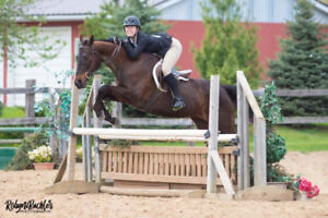 14 Year Old TB Mare For Sale WTC, Jumper, Hack