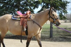 4 year old Quarter Horse Dunn Mare