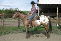 Confident Appaloosa trail horse available