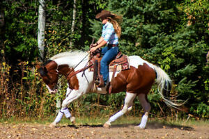 Horse Training and lessons!