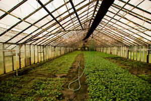Greenhouse Land Opportunity - Food and/or Marijuana