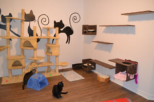 Pension pour chats sans cages litière fournis Félinat