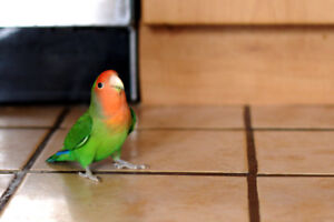 """""""""""❤★❤ Love Bird Babies with Cage❤★❤"""""""""""