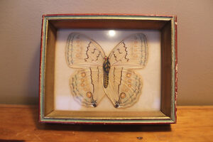 "Old ""Butterfly"" In a Box London Ontario image 1"