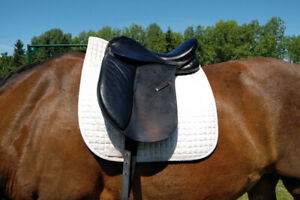 17 Dressage Saddle | Kijiji in Alberta  - Buy, Sell & Save