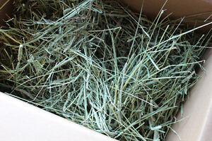 Huge box of timothy hay: perfect for a rabbit or guinea pig