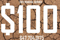 Tree cutting/removal $100, extra 10% off. 647-704-0175 (j).