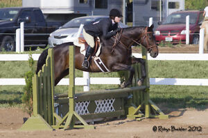 Boarding/Riding lessons
