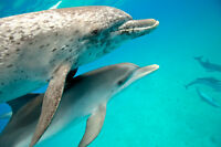 Dolphin SWIM and Retreat July 5-11