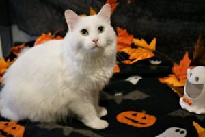 This is Cashmere from Petsave rescue