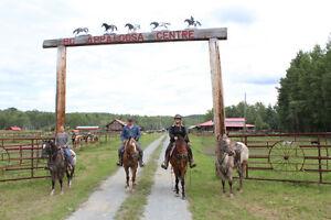 Beginner horsemanship and ridding instruction