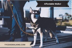 Mobile Doggie Daycare / Affordable Dog Walking