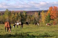 Pension extérieure pour cheval  à 15 min de sherbrooke