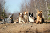 Obedience classes Lower Sackville