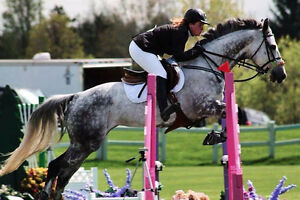Recreational + Competitive Riding Lessons