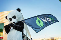 AVOCOBAR IS HIRING A PANDA!!