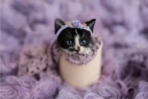 LOOKING FOR ; KITTENS FOR PHOTOSHOOT