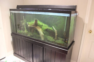 120 Gallon Aquarium 60x18x25 with matching stand & lots of extra