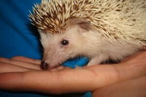 Annie The Hedgehog and Large Cage