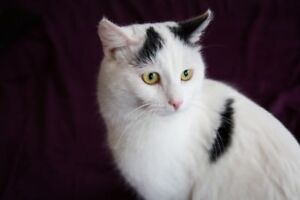 Fully vetted 18 month old rescue kitty for adoption