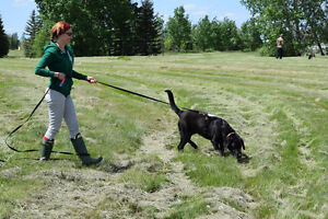 All Breed Tracking Classes