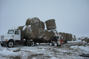 HAY / BALES FOR SALE