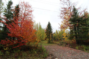 Wooded lot close to Dieppe City Limit