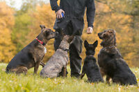 Group Dog Obedience Classes - 7 week program in St. Catharines