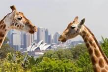 Taronga Zoo Ticket Pass Sydney City Inner Sydney Preview