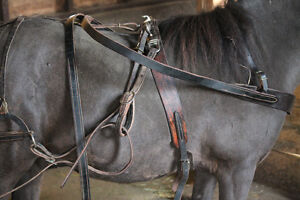 pony or large miniature harness