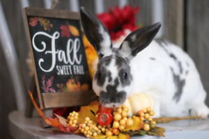 Female mini rex bunny looking for her forever family