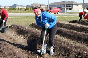 Meals on Wheels Garden Coordinator - Breslau Kitchener / Waterloo Kitchener Area image 1