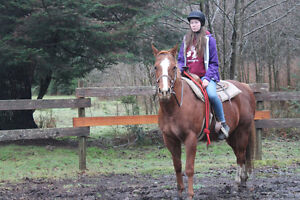 2003 sorrel QH kids/trail horse Campbell River Comox Valley Area image 2