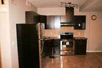 BASEMENT FOR RENT IN SKYVIEW RANCH CALGARY