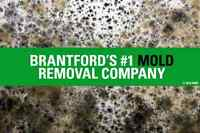 Mold Inspections, Mould Removal / Remediation in Brantford.
