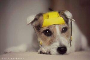 Optivizor-eye & face visor for your dog, cat & other pets!