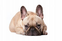 Dog Emotion and Cognition Online Course