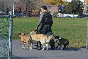 Dressage Canin - *Résous vos problèmes de comportements*