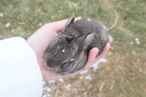 Baby bunnies, ready for end of May