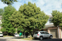 Beautiful furnished Town House in Dundas, Hamilton - For Rent