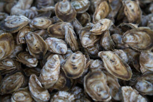 Oyster lease