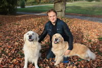 Dog Training - In your very own home!
