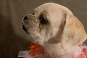 DASH WOULD LIKE A LOVING HOME WITH A FURRY FRIEND