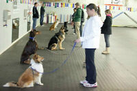 Group Obedience/ Agility Classes