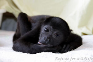 SPEND A MONTH WITH MONKEYS!! Prince George British Columbia image 3