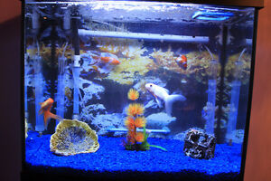 Aquarium with stand, with 4 gold fishes, with everything