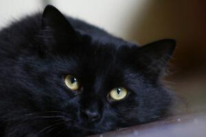 Gardien pour chats a domicile